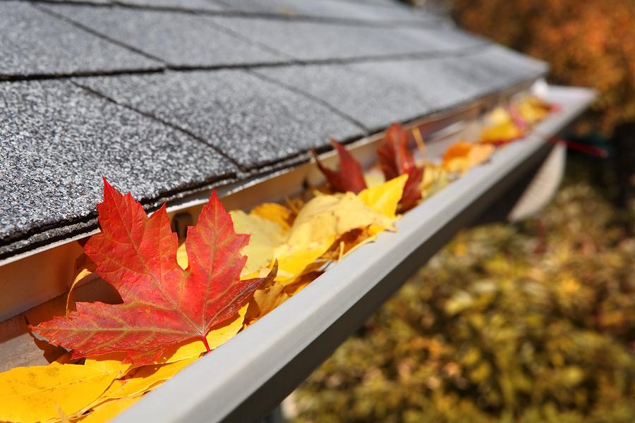 bigstock-Leaves-in-a-rain-gutter-16441973